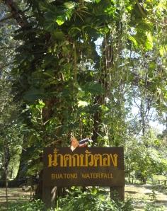 Bua Tong sign